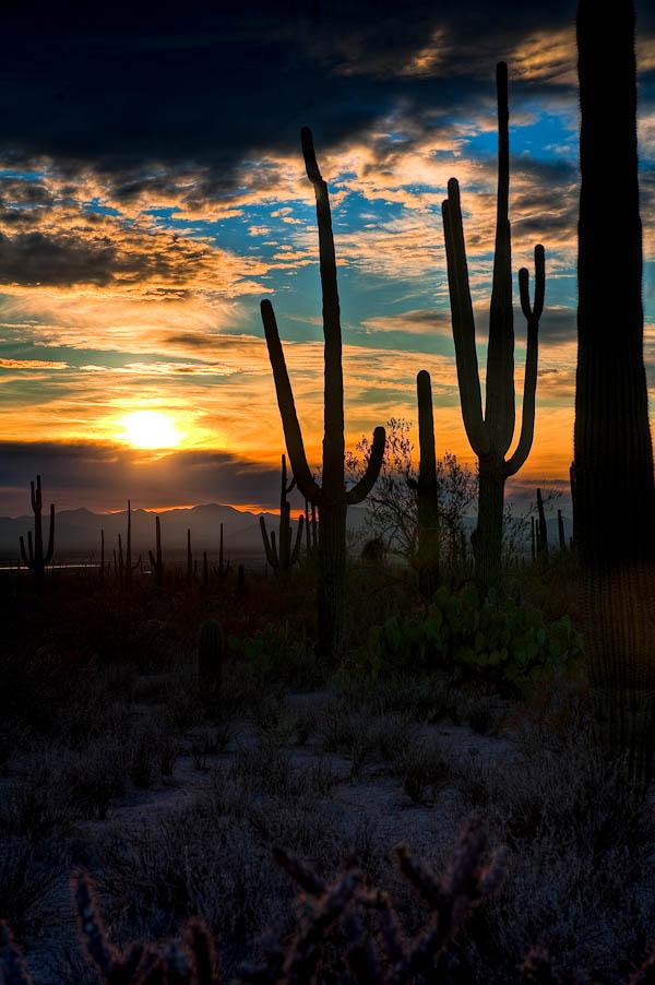 HDR photography of Cactus Sunset Saguaro Park Vertical