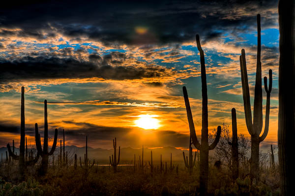 HDR photography of Cactus Sunset Saguaro Park