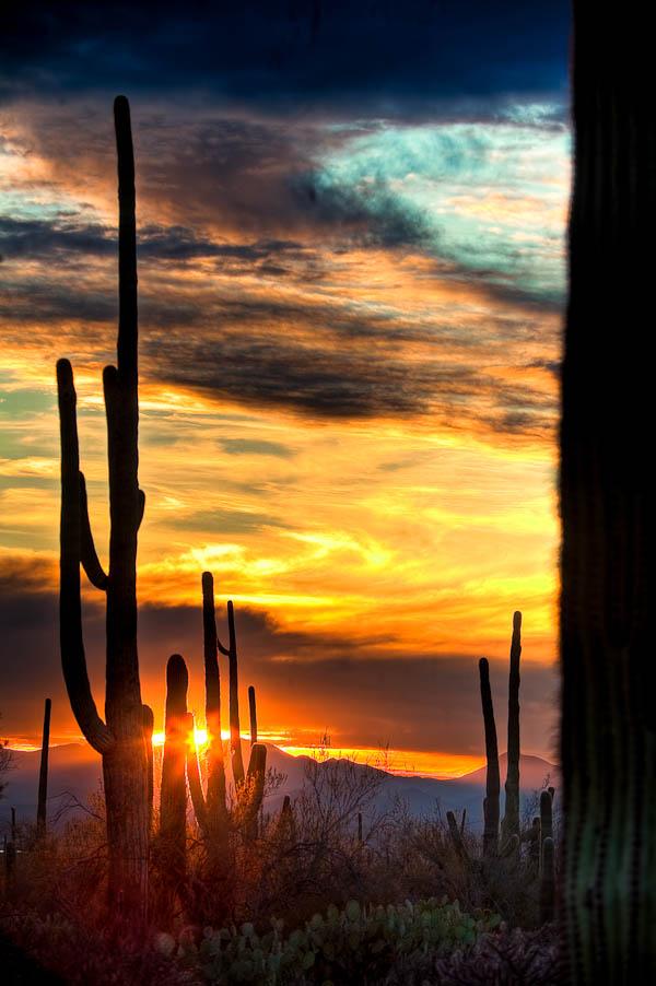 HDR Cactus Sunset photo Saguaro Park