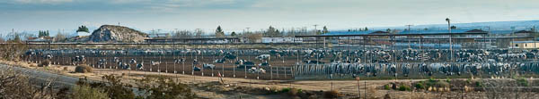 factory farm in New Mexico