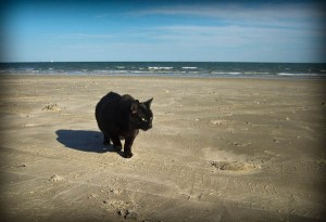 boo on the sand