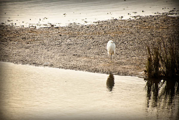 egret at Sea Breeze RV park