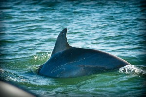 Day 85 – Dolphin Connection dolphin tour