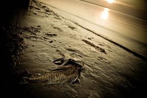 fish sunset