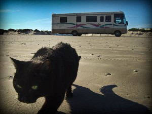 my cat boo and the rv on the beach