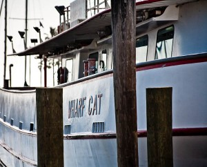Wharf Cat for our Whooping Crane Boat Tour