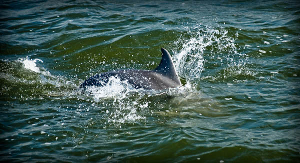 Dolphins on our birding tour