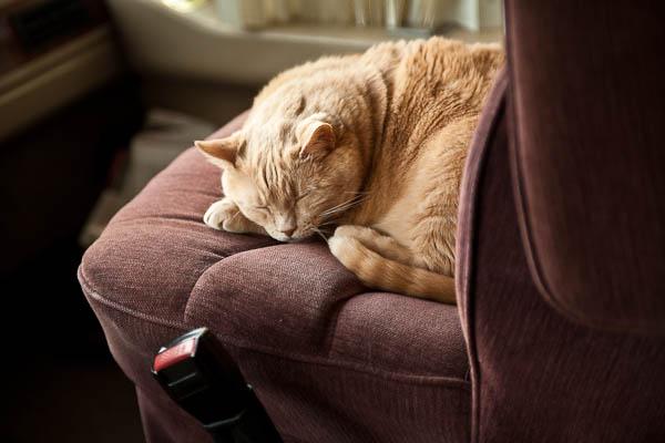 Pumpkin sleeping in Dar's seat