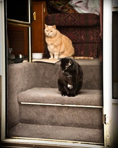 Cats thinking about going out