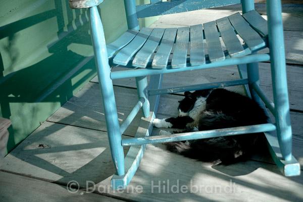 cat of laura plantation