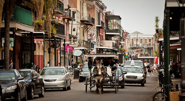 Mule and buggy, French Quarter