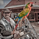 Tombstone Biker Bird